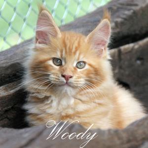 27-04- 046-woody
