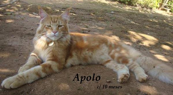 Apolo-Urbanin2